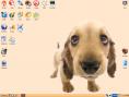 Image de sortie de Puppy Linux 4.1 sur News.Softpedia.com