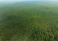Plantation d'eucalyptus